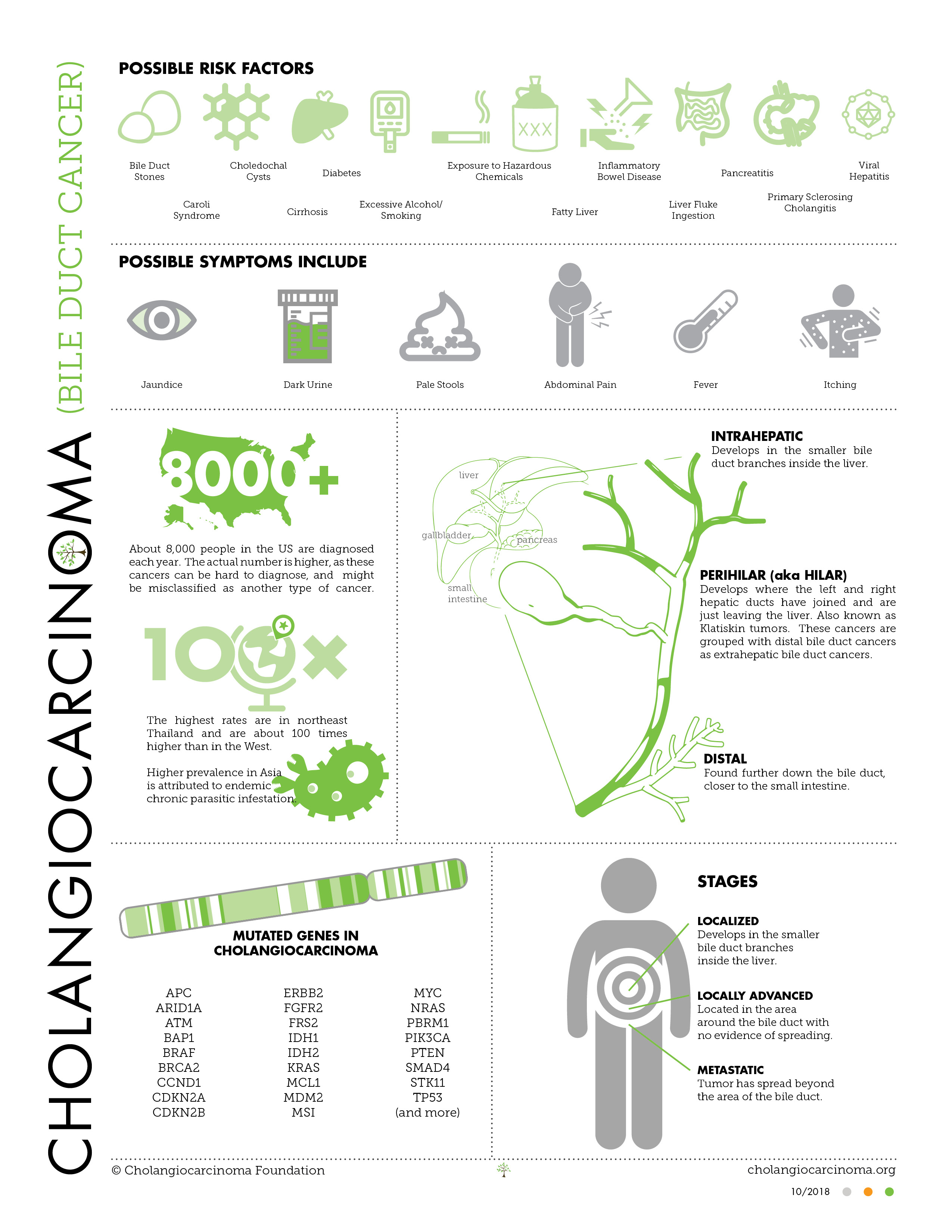 Overview | The Cholangiocarcinoma Foundation